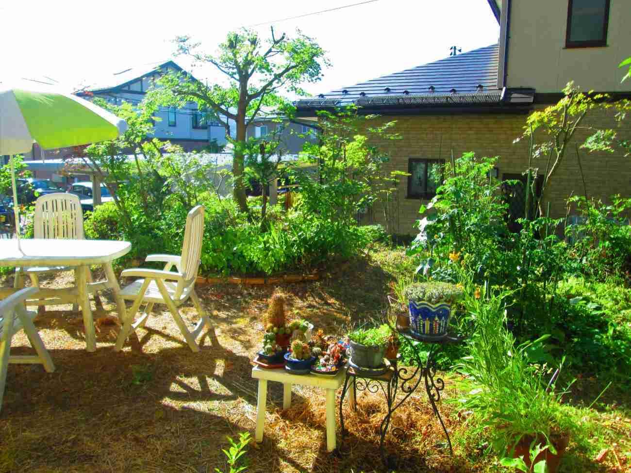 ジャングルだった庭が、きれいに明るくなりました_d0159273_08273615.jpg