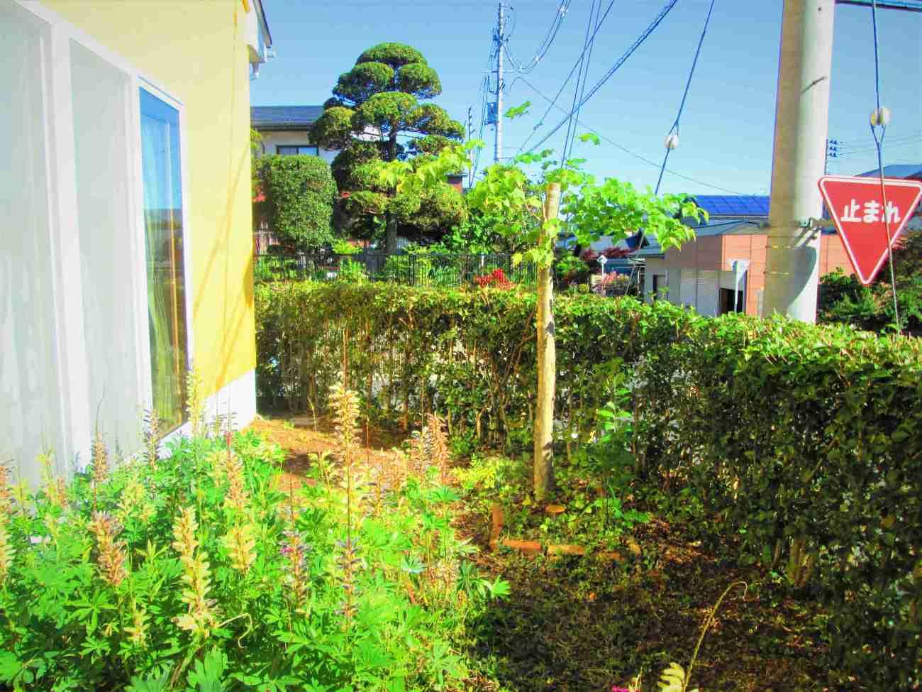 ジャングルだった庭が、きれいに明るくなりました_d0159273_08282166.jpg
