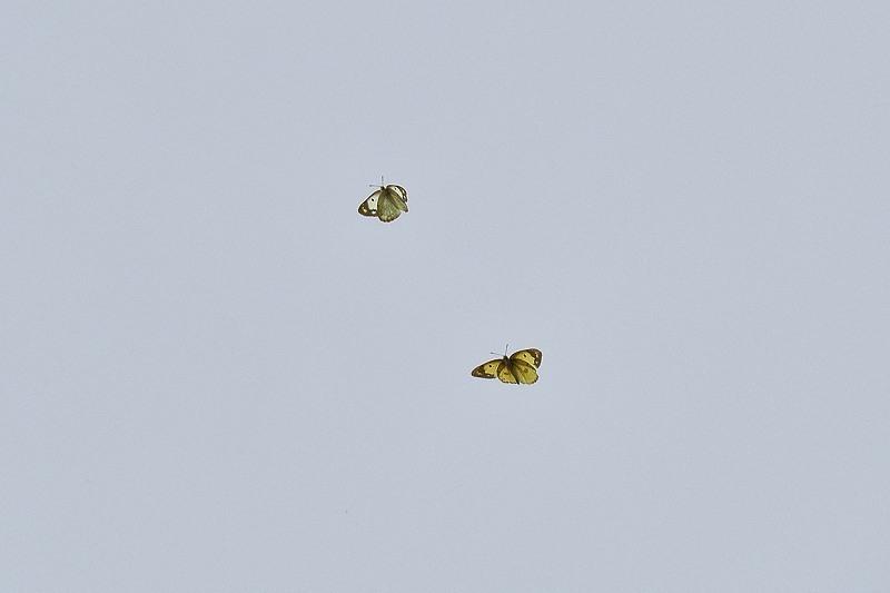 小畔川便り(オリンパスE-M5Ⅲの設定:2020/6/24.25)_f0031682_09520930.jpg