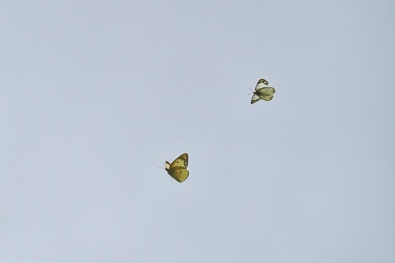 小畔川便り(オリンパスE-M5Ⅲの設定:2020/6/24.25)_f0031682_09521086.jpg