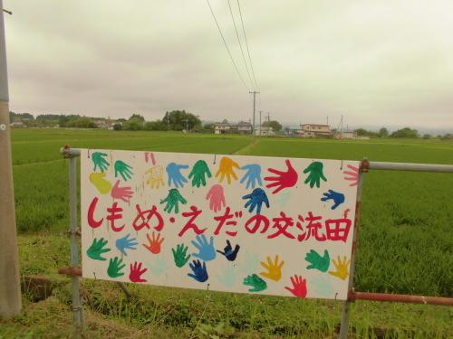 6月30日の田んぼの様子(下目黒小・枝野小)_d0247484_12541482.jpg