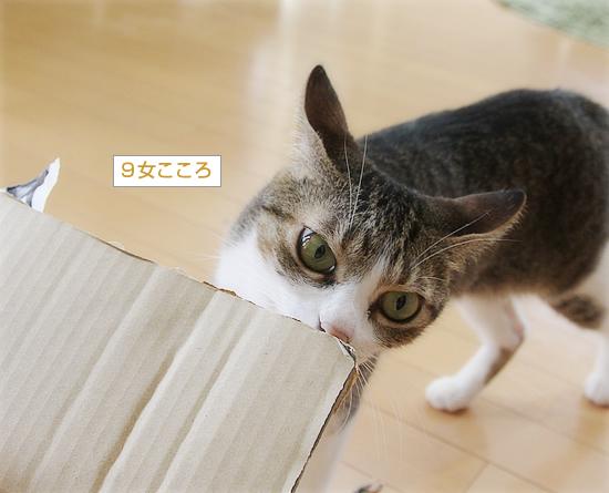 猫猫プレゼント_a0389088_11454302.jpg