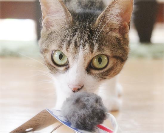 猫猫プレゼント_a0389088_11454373.jpg