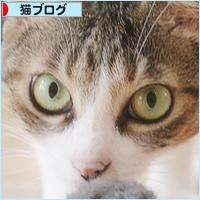 猫猫プレゼント_a0389088_11454416.jpg