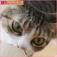 猫猫プレゼント_a0389088_11454456.jpg