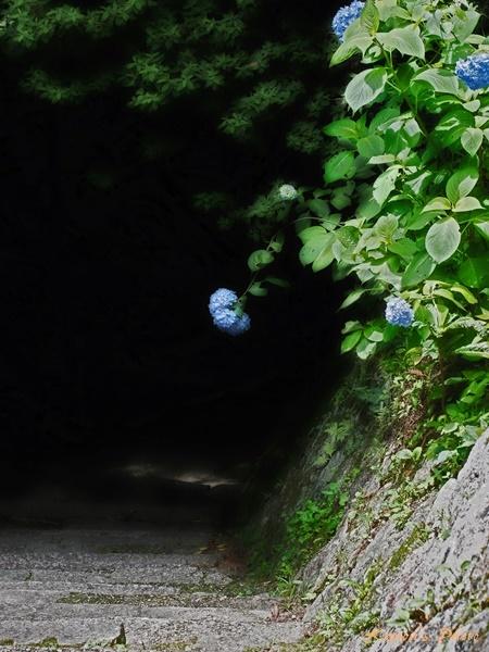 石階段 ~笠置寺にて_e0092293_11403192.jpg