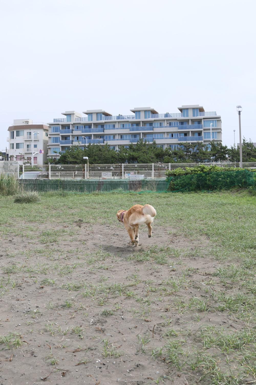 朝の鵠沼海岸♪_b0275998_13482679.jpg