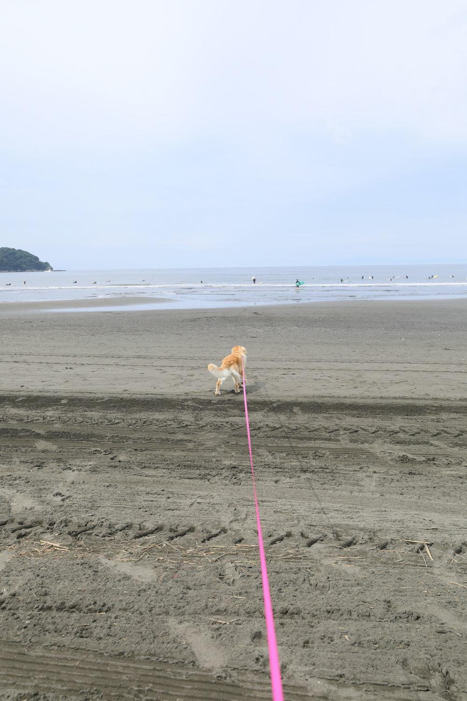 朝の鵠沼海岸♪_b0275998_13484794.jpg
