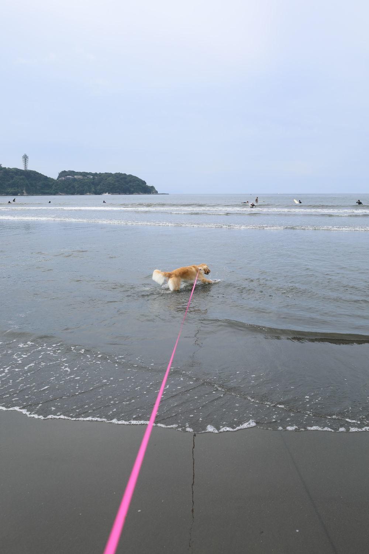 朝の鵠沼海岸♪_b0275998_13484982.jpg