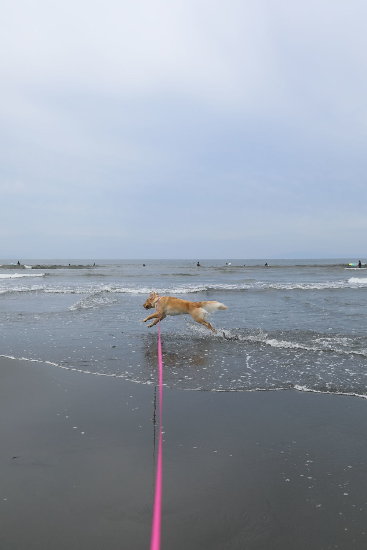 朝の鵠沼海岸♪_b0275998_13491411.jpg