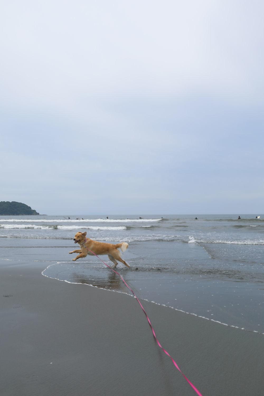 朝の鵠沼海岸♪_b0275998_13491711.jpg