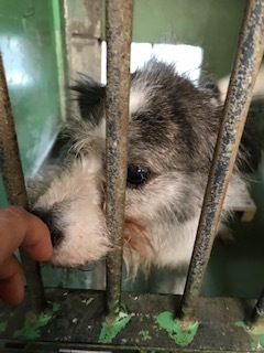 【犬猫・移動先募集】センター(支所)収容(6/26訪問)_f0242002_11382589.jpg