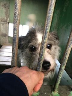 【犬猫・移動先募集】センター(支所)収容(6/26訪問)_f0242002_11383210.jpg
