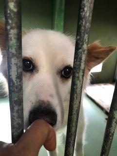 【犬猫・移動先募集】センター(支所)収容(6/26訪問)_f0242002_17515287.jpg