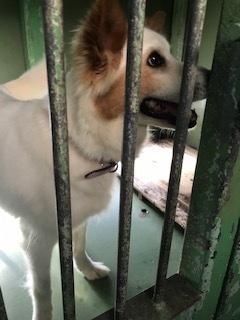 【犬猫・移動先募集】センター(支所)収容(6/26訪問)_f0242002_17523930.jpg