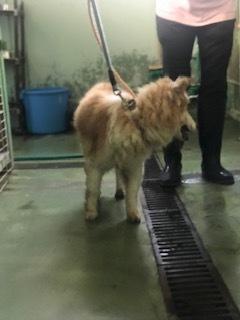 【犬猫・移動先募集】センター(支所)収容(6/26訪問)_f0242002_17531530.jpg