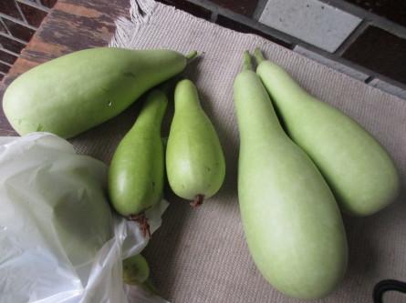 1020)夏野菜が採れ出しました。_b0029010_14011860.jpg