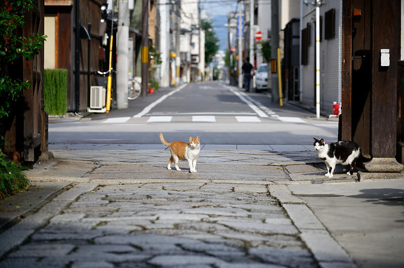 町角ニャンコ・行願寺のニャンコ_f0032011_18030822.jpg
