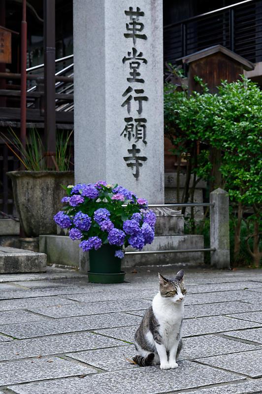 町角ニャンコ・行願寺のニャンコ_f0032011_18030995.jpg