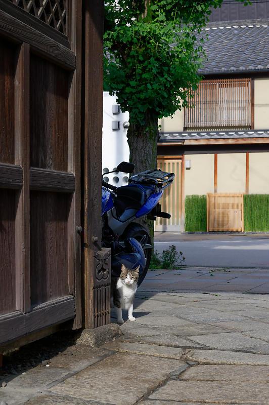 町角ニャンコ・行願寺のニャンコ_f0032011_18031024.jpg