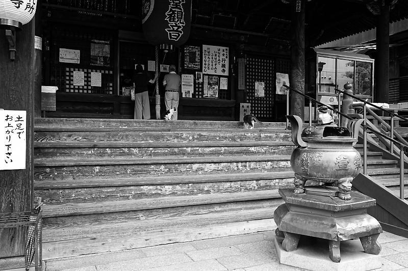 町角ニャンコ・行願寺のニャンコ_f0032011_18052236.jpg