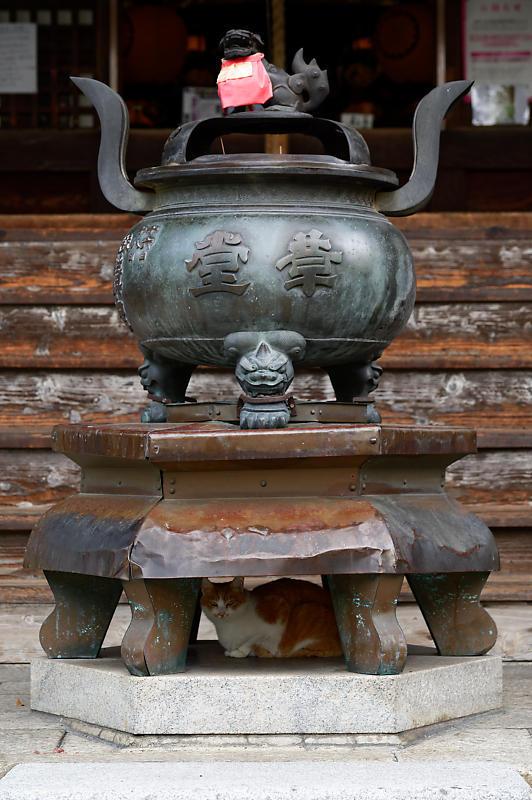 町角ニャンコ・行願寺のニャンコ_f0032011_18070348.jpg