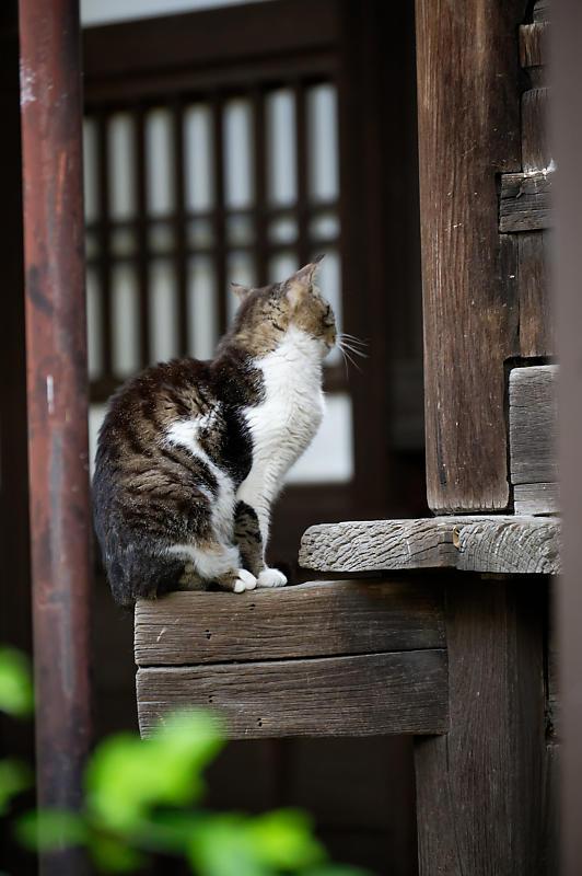 町角ニャンコ・行願寺のニャンコ_f0032011_18070358.jpg