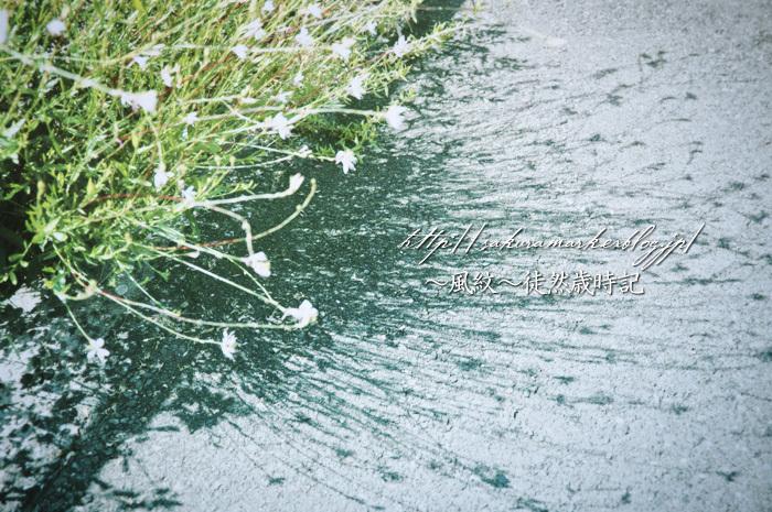 夏日向に咲く。_f0235723_19502695.jpg