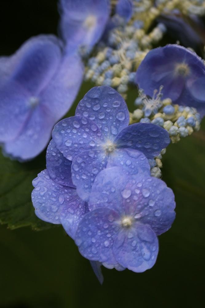 雨降りの一日_c0111229_19343635.jpg