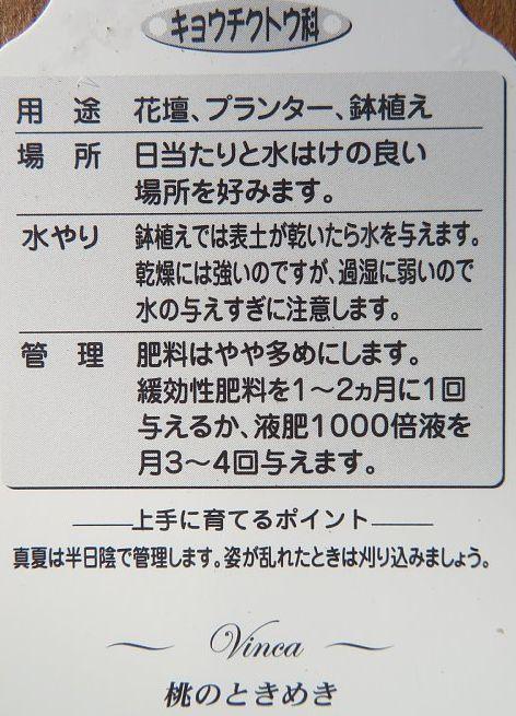 2020年7月20日 夏花壇 ②  !(^^)!_b0341140_04544131.jpg