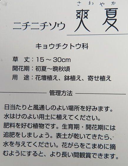 2020年7月20日 夏花壇 ②  !(^^)!_b0341140_04573614.jpg