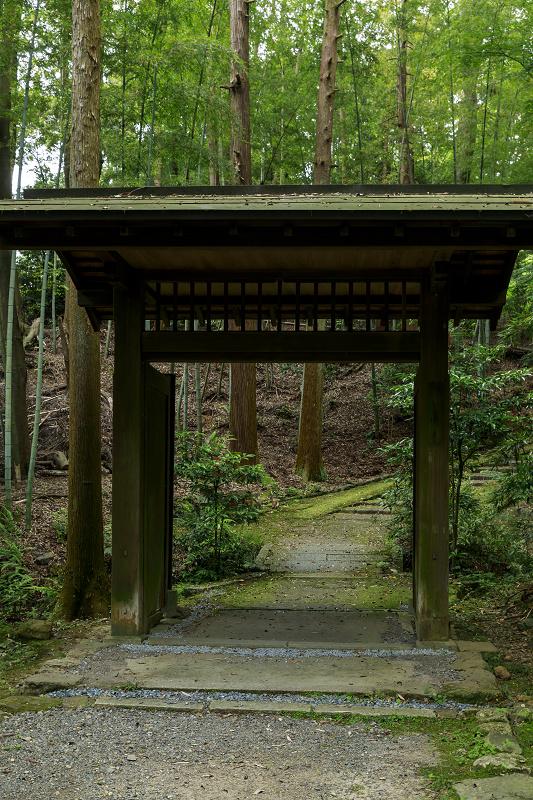 正伝寺のサツキ_f0155048_016211.jpg