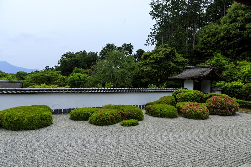 正伝寺のサツキ_f0155048_0164232.jpg