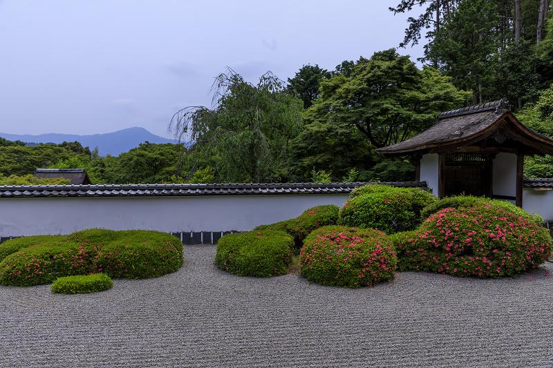 正伝寺のサツキ_f0155048_0173042.jpg