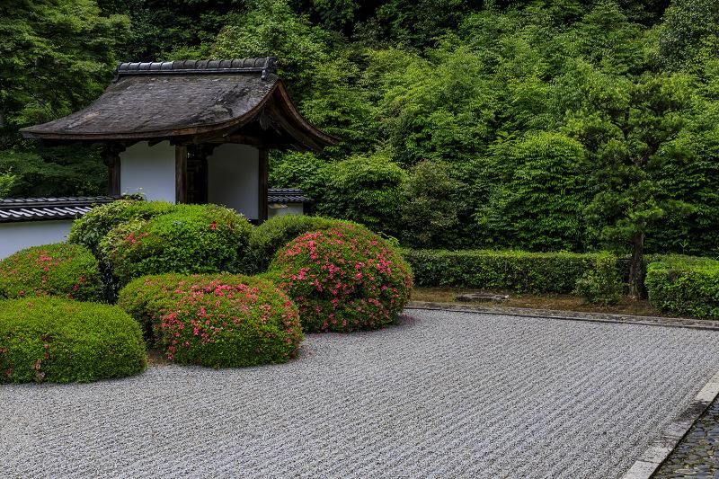 正伝寺のサツキ_f0155048_0174775.jpg