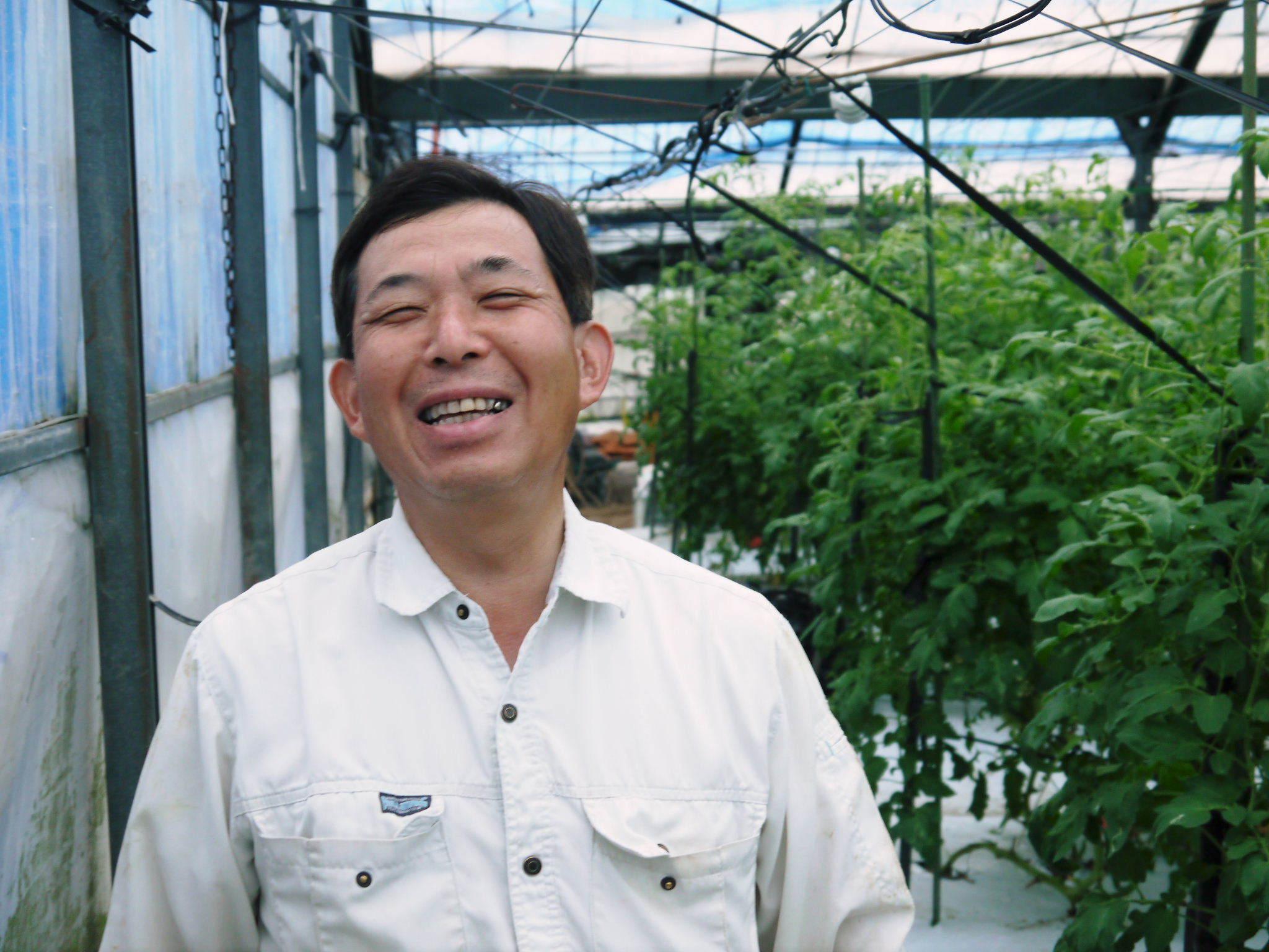 樹上完熟の朝採りトマト 最旬食材!大好評販売中!朝採り収穫の様子を現地取材!_a0254656_19060305.jpg