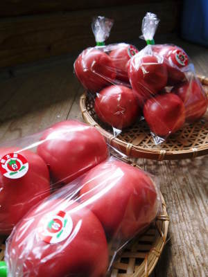 樹上完熟の朝採りトマト 最旬食材!大好評販売中!朝採り収穫の様子を現地取材!_a0254656_19351547.jpg