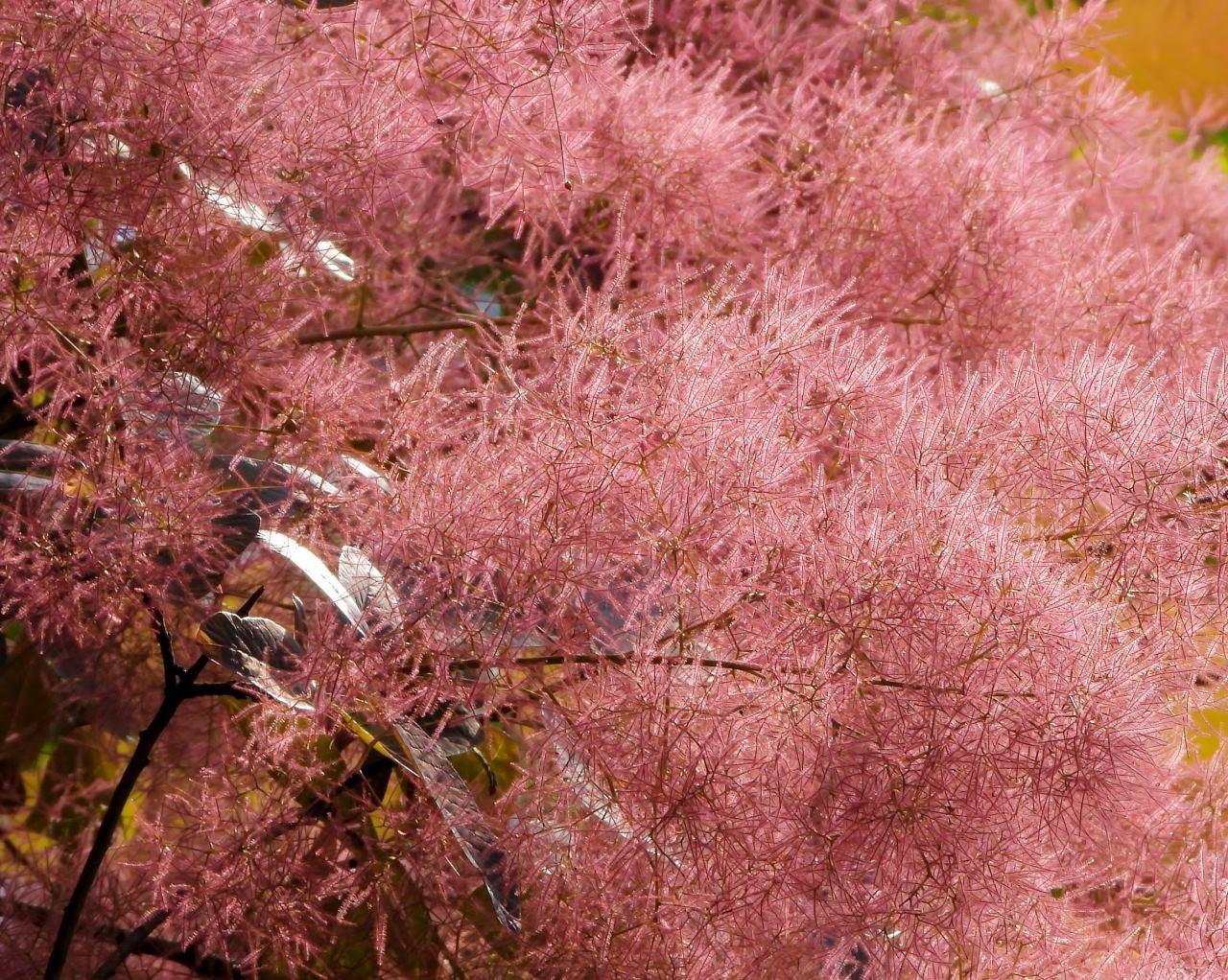 高原の『五月晴』の空気感を再び_c0305565_17242706.jpg