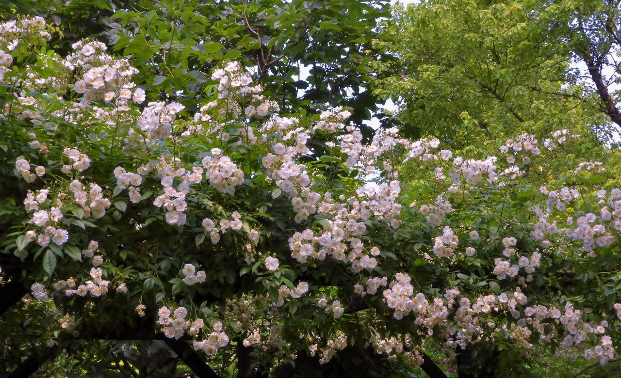 高原の『五月晴』の空気感を再び_c0305565_17250190.jpg