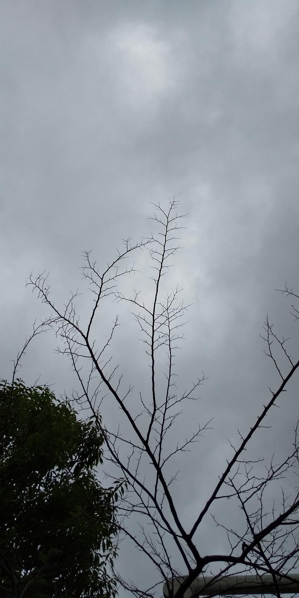 🌧️ もの凄い雨と風 🌧️ まちかどカフェ 🎤 九州の豪雨被害、お見舞い申し上げます 🙇_f0061067_22043024.jpg