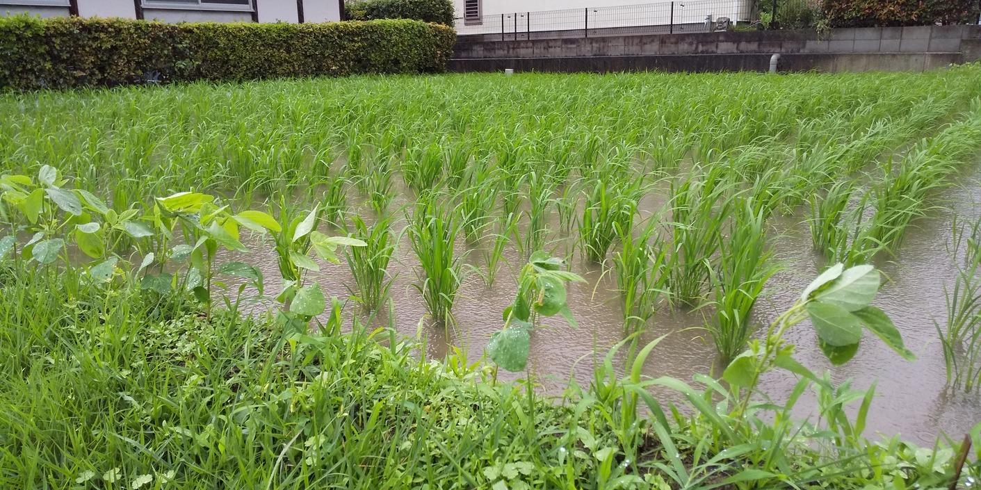 🌧️ もの凄い雨と風 🌧️ まちかどカフェ 🎤 九州の豪雨被害、お見舞い申し上げます 🙇_f0061067_22043086.jpg