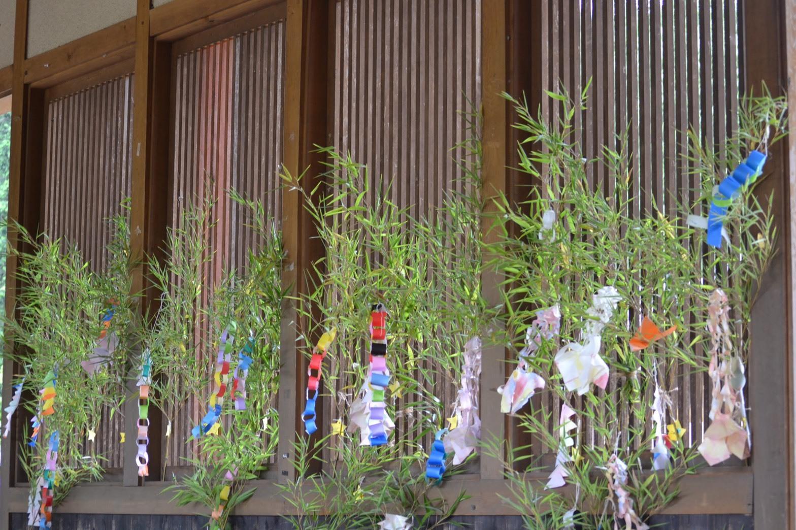 笹の葉さ~らさら🎋_b0339392_08055412.jpg