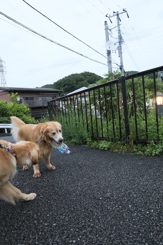 ムギちゃんとムギ茶♪_b0275998_16324692.jpg
