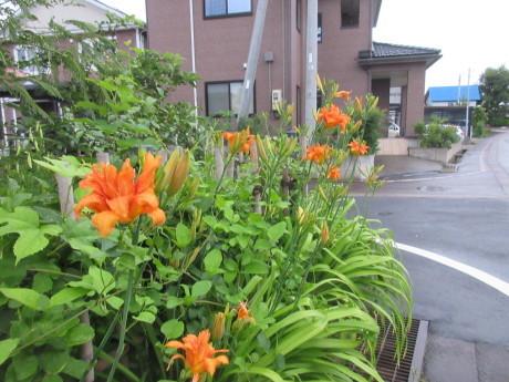 沖縄の風は強風_a0203003_18515334.jpg