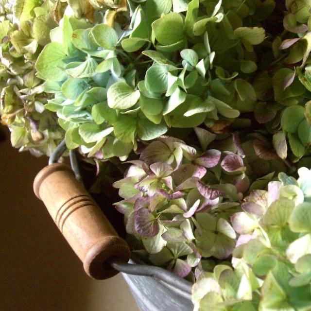 7月 Flower  Lesson のお知らせ_d0165505_09011892.jpg