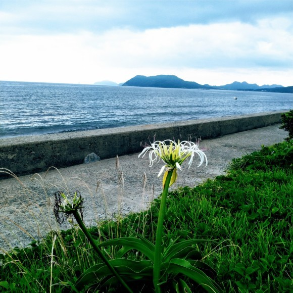糸島半島 西の浦海岸へ オブジェ作品の材料探し_a0212807_20330891.jpg