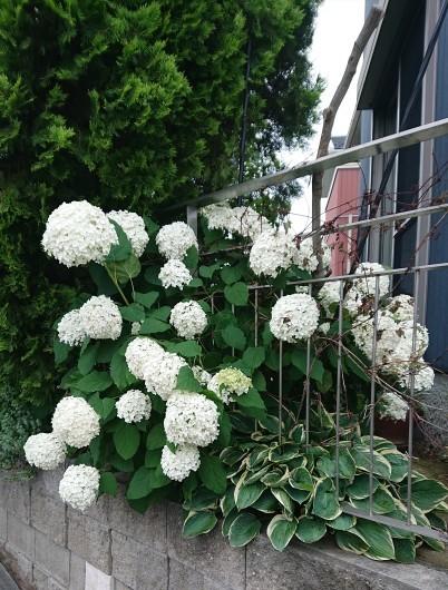 お庭の草花たち_c0179308_13213767.jpg