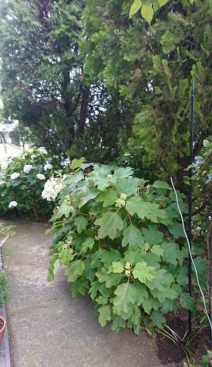 お庭の草花たち_c0179308_13352068.jpg