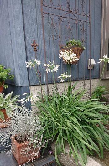 お庭の草花たち_c0179308_13365966.jpg