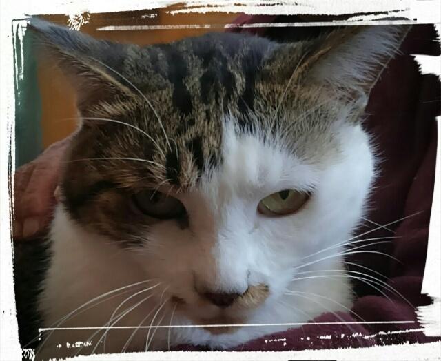 『vol.4092 親戚の猫ちゃん』_e0040714_23345506.jpg